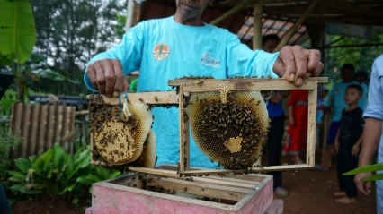rumpin-lebah-madu.jpg
